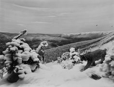 Hiroshi Sugimoto: Canadian Lynx (1980) - ?