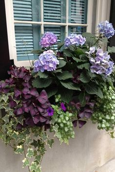 Check out these beautiful ways to grow hydrangeas in containers. #beautifulflowersgarden #shadecontainergardeningideas