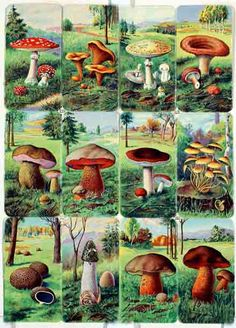 ✿ Mushrooms Art ✿ Backgrounds