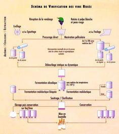 "Résultat de recherche d'images pour ""comment produire du vin"" Wine Making Process, Wine Direct, Wine Sale, Cheap Wine, In Vino Veritas, Wine Recipes, Champagne, Beer, Cave"