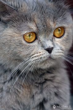 Amber eyes by Sandra (Nikodema) on 500px