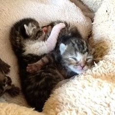 New-born orphaned kittens need special care 67 Happy Pictures, Cats And Kittens, Shelter, Pets, Healthy, Animals, Animales, Animaux, Happy Images