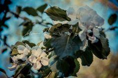 #JohannaAmnelin #photographyforsale #printsforsale #photographyart #fineartphotography #photography #exhibition #Finland #Finnish #FinnishPhotography #Urbex #Urbanexploration #car #streetfighters #motorcycle #photo #photos #picture #pictures #pic #pics #snapshot #art #beautiful #picoftheday #photooftheday #exposure #composition #capture #www.johannaamnelin.net