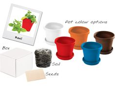BASIL IN A BOX Basil, Planter Pots, Seeds, Box, Outdoor, Color, Outdoors, Snare Drum, Colour
