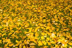 yellow carpet by Amie Croteau - Photo 127929239 - 500px