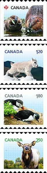 Canada - various animals