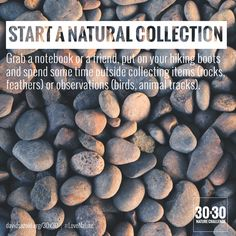 Start A Natural Collection
