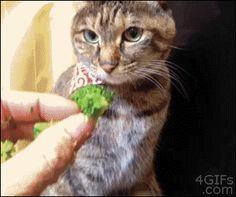 【GIFアニメ】 猫にブロッコリーをあげようとしたら・・・ まさかの展開に草不可避www