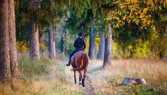 Young rider girl on bay horse in the autumn park at sunset. Teenage girl riding horse in park , Bay Horse, Autumn Park, Horse Girl, Presentation Design, Photo Editing, Royalty Free Stock Photos, Horses, Sunset, Illustration
