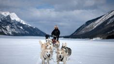 Banff Adventures - Top Canadian Vacation Packages - http://www.banffadventures.com/# Dogsled, Snowmobile, Ice Walk