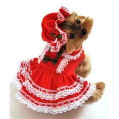 """Two piece """"Miss Santa Baby"""" dog costume, includes tiered lace trim red Christmas dress with bow accents and adjustable drawstring bonnet hat with mistletoe detail. Easy to wear front closure. Dog Halloween Costumes, Pet Costumes, Small Dog Costumes, Animal Costumes, Happy Halloween, Baby Dogs, Pet Dogs, Pets, Baby Baby"""