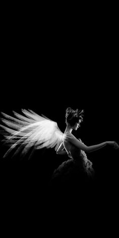 Would you kiss the wings of an angel? Of your angel? Black N White, Black White Photos, Black And White Photography, White Swan, Black Swan, Angels Among Us, Angels And Demons, Dark Angels, Fallen Angels