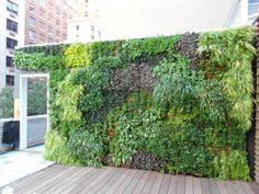 Living Walls by Trevor Smith : HGTV Gardens