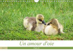 Un amour d'oie - CALVENDO