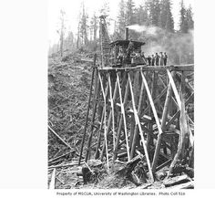 Construction crew and 80 foot trestle under construction, Schafer Brothers Logging Company, n.d. :: Kinsey Brothers Photographs of the Lumber Industry, 1890-1945