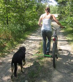 Cycling With Your Dog Made Easy With The Springer Bike Attachment