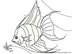 After Realistic Coloring Pages Share Goldfish And Aquarium Fish Sheet Now We Will A Tropical
