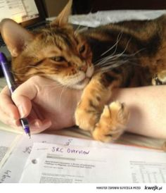 """no no no you must pet me yes stop writing now put that pen down i want attention"""