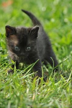 Ooooooh, How cute!!!!