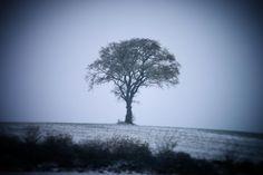 Træ på bakke ved Ørsted#visitfyn #fyn #nature #visitdenmark #naturelovers #nofilter #natur #denmark #danmark #dänemark #landscape #nofilter #assens #mitassens #vildmedfyn #fynerfin #assensnatur #vielskernaturen #visitassens #forrest #instapic #tree #hill #snow #sne #picoftheday #november