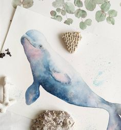 My Happy Beluga whale is up on my online shop www estherpeck storenvy com If you want to learn this cutie I st Whale painting Watercolor whale Whale drawing