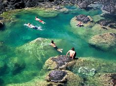 Mermaid pools near Matapouri Bay in New Zealand, so want to go there!