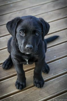 I love the black dogs! Reminds me of my sweet boy Boomer...