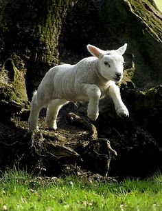 Free your Mind.....(Jumping lamb) by Roeselien Raimond, via Flickr
