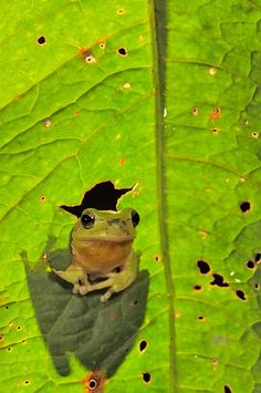 ~♥~ too adorable not to pin ~♥~ Frog