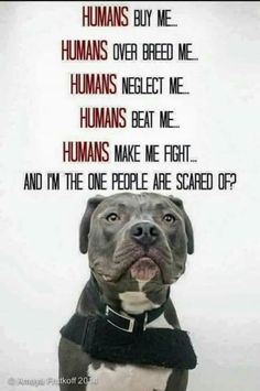So sick and tired of all the ignorance and bigotry regarding pitbulls.And I have spoiled mine! I Love Dogs, Puppy Love, Cute Dogs, Dog Quotes, Animal Quotes, Pit Bull Quotes, True Quotes, Beautiful Dogs, Animals Beautiful