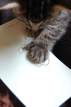 not all kitties can do this by *lalalaurie, via Flickr