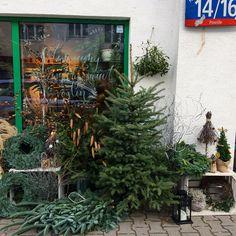 Kochani zapraszamy do składania zamówień na choinki, wieńce i inne ozdoby świąteczne.  Mamy dla Was wspaniałą wiadomość. Na ten weekend szykujemy na Powiślu świąteczny kiermasz.  A już jutro więcej informacji na ten temat.  Zapraszamy na Powiśle na ul. dobrą 14/16.  Wpadajcie do nas koniecznie! #plantroomstudio #plantroom #plants #winter #christmasdecorations #xmas #xmasdecor #xmastree #xmastime #greendetails #xmasdetails #naturaldecor #wreath #xmaswreath #winterwreath #powisle…