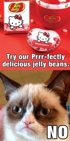 Stupid, grumpy cat