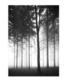 wallpaper: forest dawn tree depth
