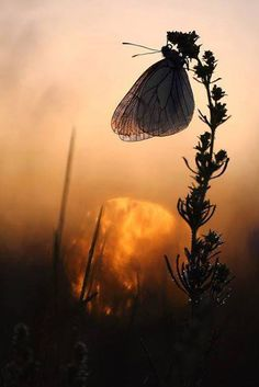 Wouw look at the butterfly in front of a fantastic sunrise/set