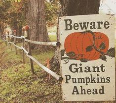 I love the dill pumpkin farm in Windsor. Biggest pumpkins I've ever seen!