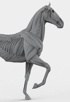 Horse_keyshot_05.jpg