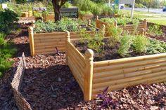 5 Steps to a DIY Vegetable Garden