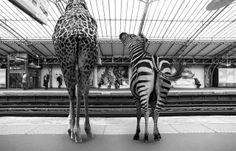 Quand le métro Parisien est envahi par de drôles d'animaux // Clarisse Rebotier & Thomas Subtil