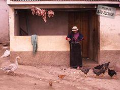 Alimentando Aves. Chimborazo - Ecuador.