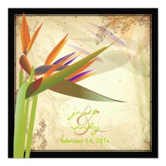 PixDezines Bird of Paradise/vintage background Custom Announcements