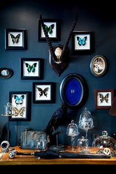 Boutique : Cabinet de curiosité de M. Honoré