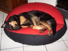 Rottweiler X German Shepherd, Benz on his Barka Parka pet bed Big Dog Beds, Pet Beds, Big Dogs, Large Dogs, Dog Photos, Rottweiler, Parka, Benz, Photo Galleries