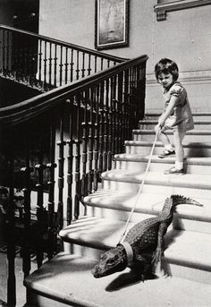 descending a staircase  in a house once lived in by britain's naval hero admiral horatio nelson, a pet crocodile is led on a tour of her home by a four old girl  photo by john drysdale, cricket st. thomas, england, 1976