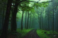 Janek Sedlar: Mist in the White Carpathians