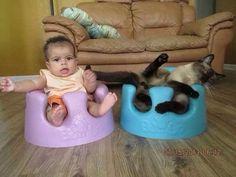 If I fits, I sits. - Imgur