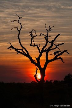 ˚Sunset In Botswana
