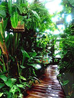 Tropical Garden Design, Tropical Backyard, Tropical Landscaping, Front Yard Landscaping, Tropical Plants, Landscaping Ideas, Backyard Ideas, Tropical Gardens, Landscaping Software