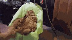 Rock a bye kitty