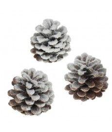 Oostenrijker denneappel Pinus Nigra Sneeuw 250gr